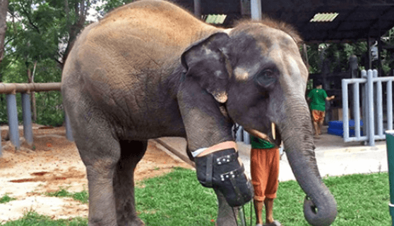 elephant-enrichment-teen-reporters-blog-short-pantsporn