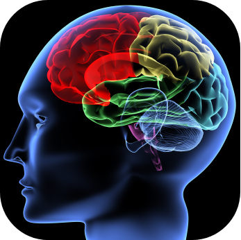 Neuroscience list of subjects to study in college