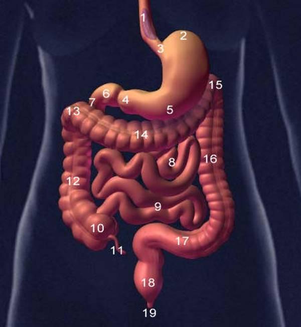 FISIOLOGÍA Y GENÉTICA DE LA NUTRICIÓN